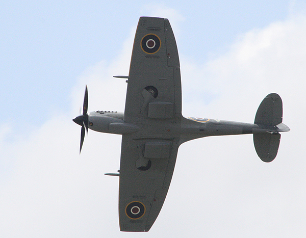 Profile showing the 'clipped wings'